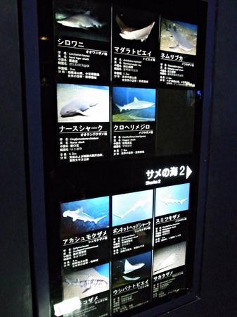 R0012896_s.jpg